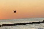 Ein Ausflug und ein Tag am Meer